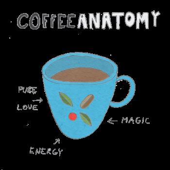 coffee anatomy transparent 800x